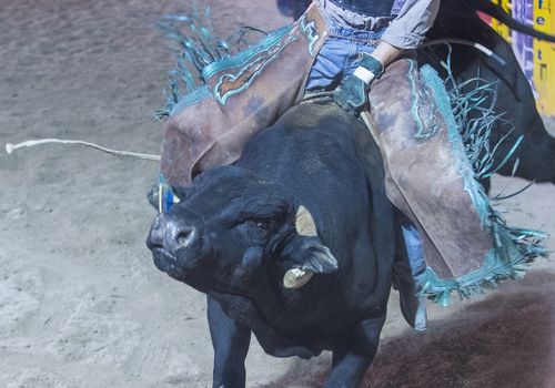 Tips To Successful Professional Bull Riding
